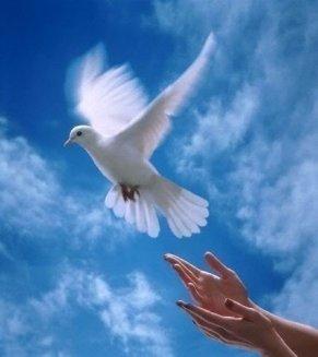 free-dove1