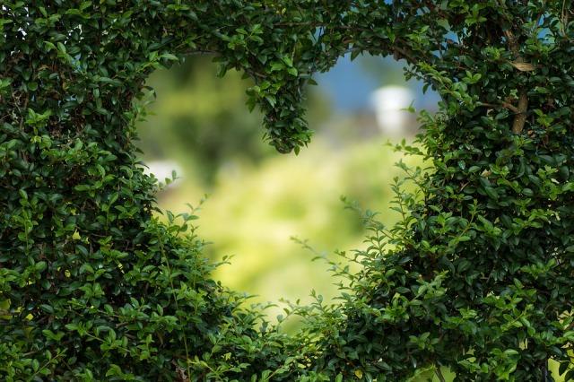 heart-1192662_960_720