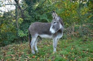 donkey-2731748_960_720
